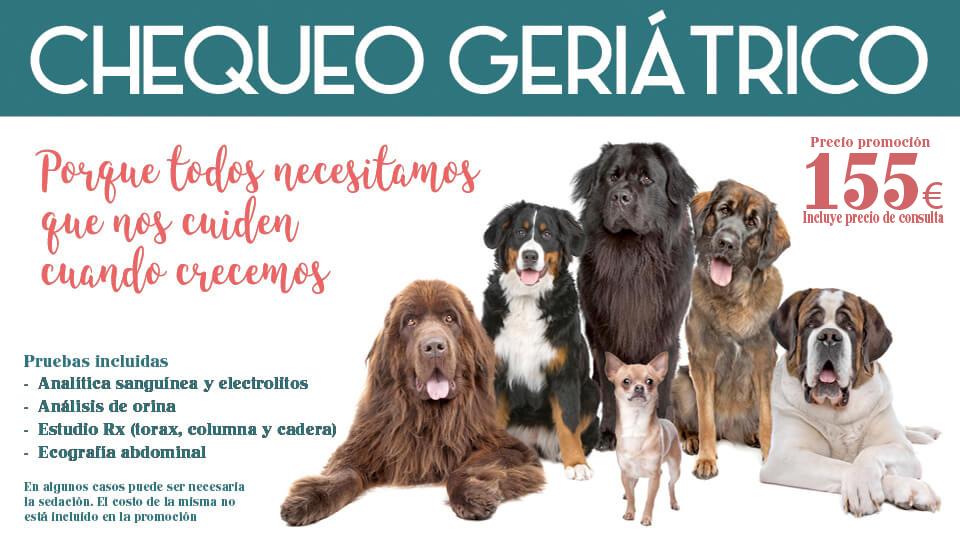 Chequeo geriátrico mascotas