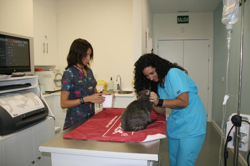 Servicios cl nica veterinaria pica for Mesa quirofano veterinaria