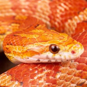 consulta veterinarias para serpiente en sevilla