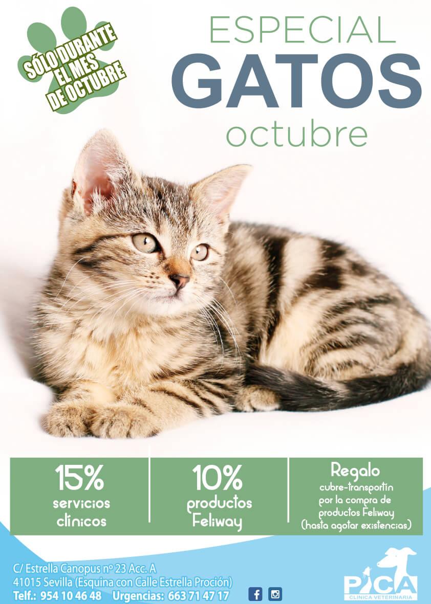 Octubre_especial_gatos