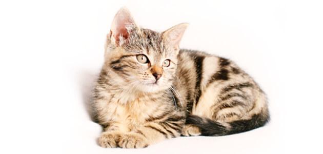 enriquecimiento ambiental en felinos