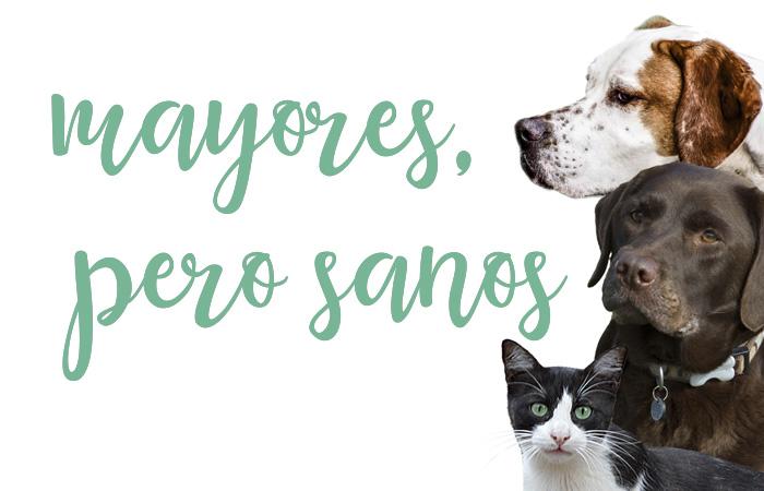 cuidados geriatricos para mascotas